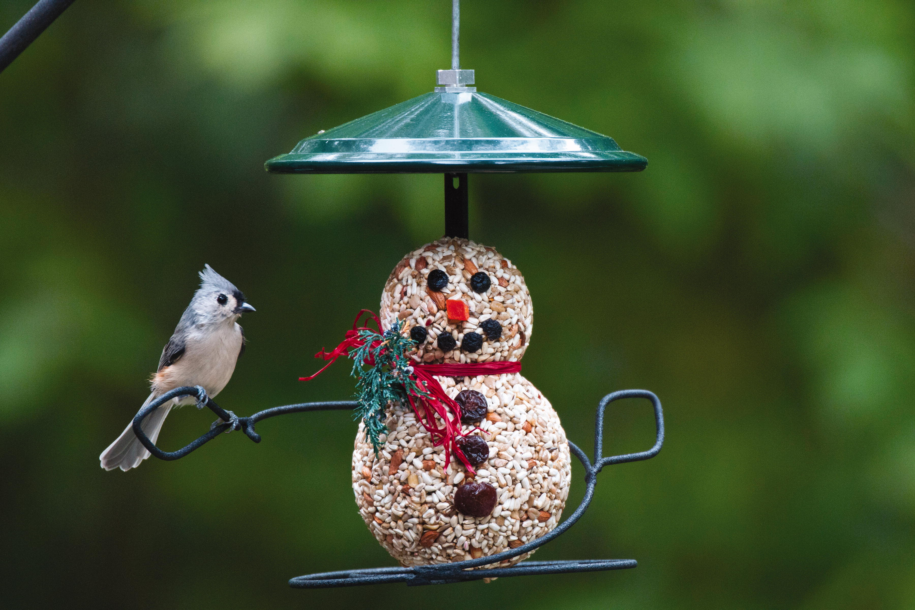 Download image Wild Bird Feeders PC, Android, iPhone and iPad
