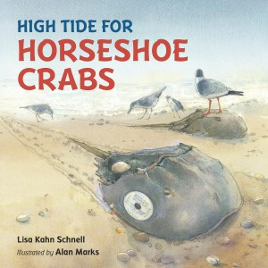 HighTideHorseshoeCrabs_300
